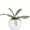 Phalaenopsis Leaf Artificial Plant Leaf Decorative Flowers Auxiliary Material Flower Decoration