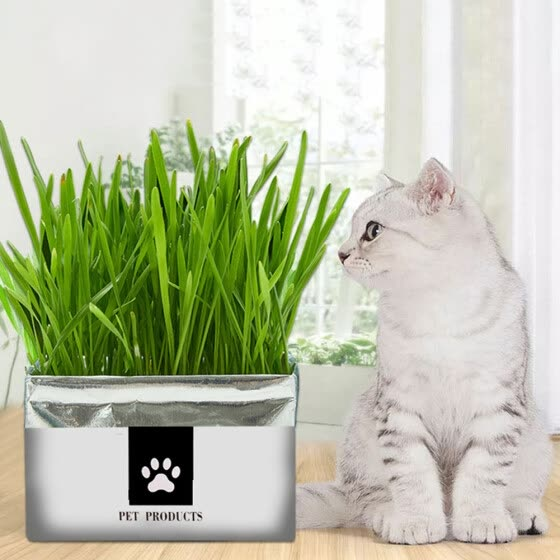 Top pet Cats Wheat Grass Seeds Bonsai Potted Edible Natural Plant Home Garden Decoration