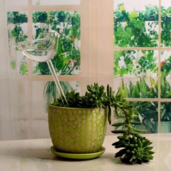 New Glass Plant Flowers Water Feeder Self Watering Bird Design Plant Watering JD