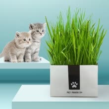 -Top pet Cats Wheat Grass Seeds Bonsai Potted Edible Natural Plant Home Garden Decoration on JD