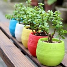 -Colourful Mini Round Plastic Plant Flower Pot Garden Home Office Decor Planter on JD